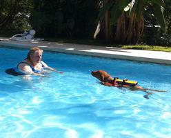 dog swim training